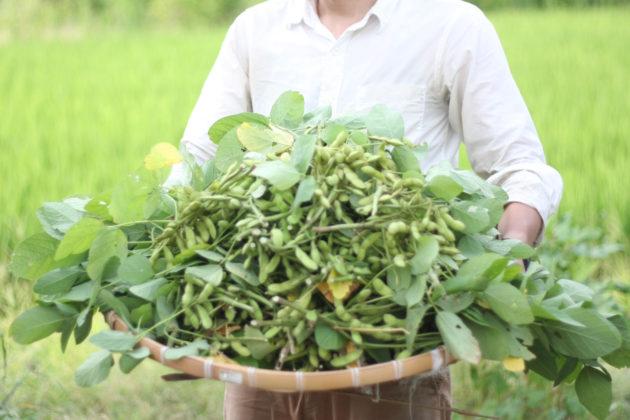 トーカンハットで収穫した枝豆