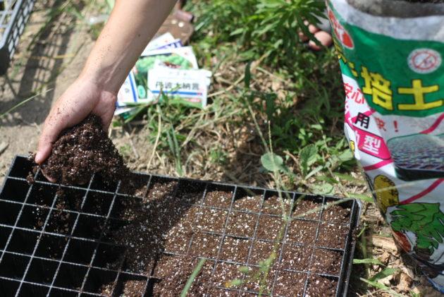 苗用のトレーに土をいれる