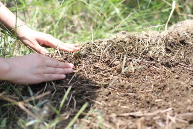 畑に種を植える様子