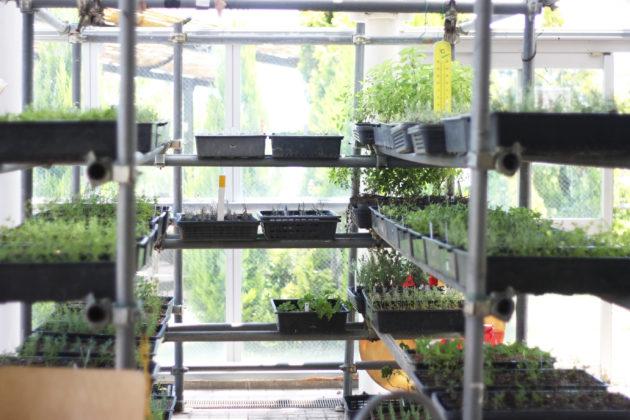ふれあいの郷ハーブ園の温室