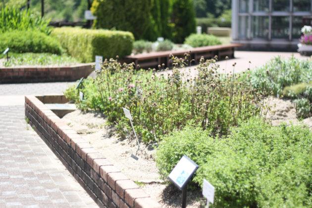 ふれあいの郷ハーブ園の花壇の様子